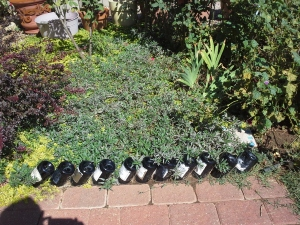 wine bottle garden