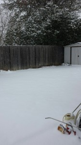 frozen back yard